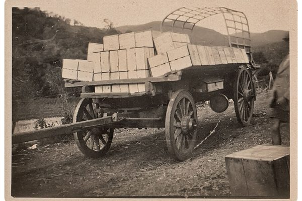 Ox Wagon Being Loaded For Deliveries